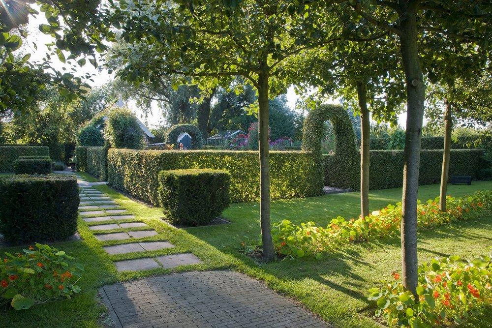 Taxus yew Fagus beech hedge formal modern garden