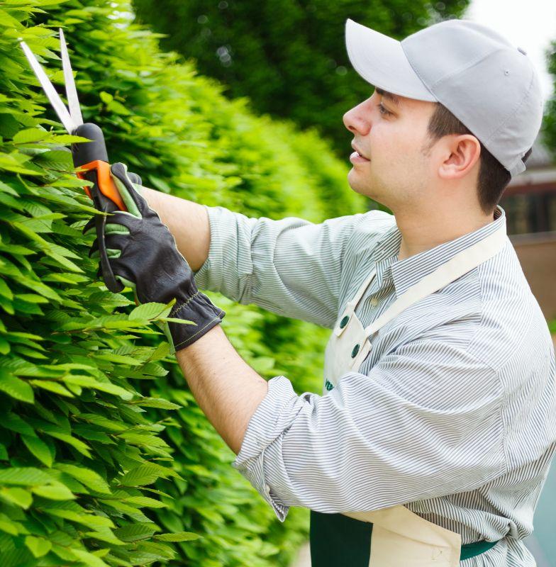 guide-pruning-shutterstock_163283969 fagus pruning faq maintenance.jpg