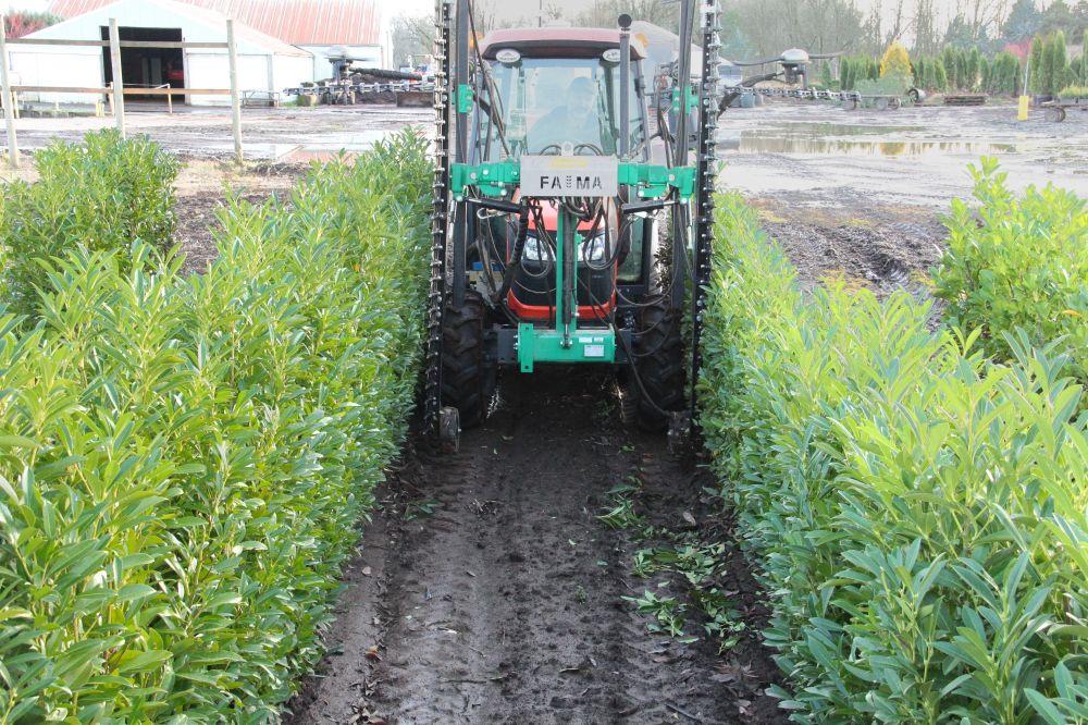 Custom Tractor Equipment pruning working hedge trim prune process