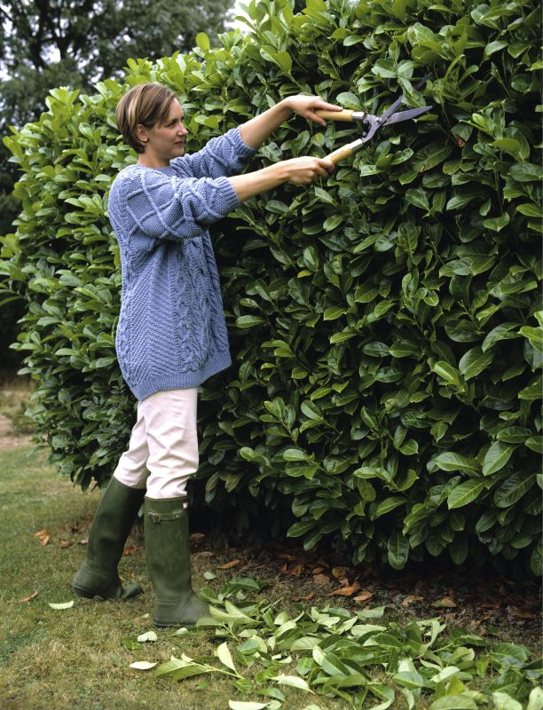 Prunus laurocerasus English laurel easy pruning country FAQ