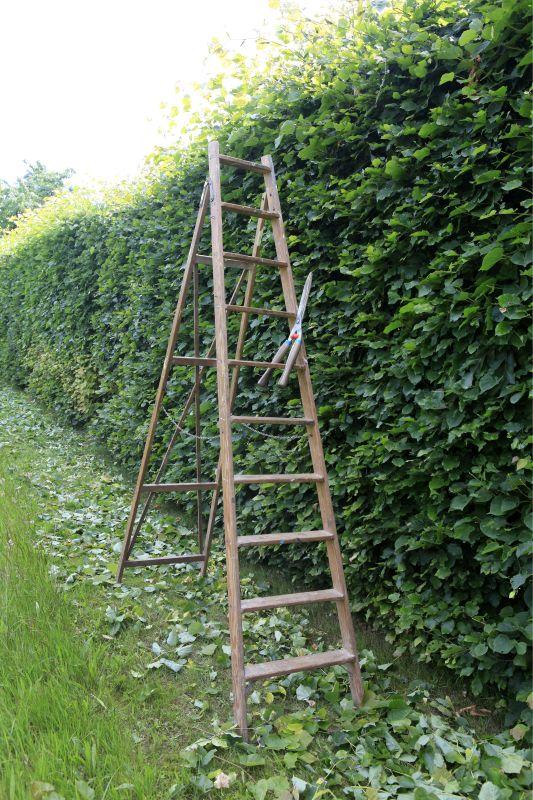 Fagus estate pruning faq