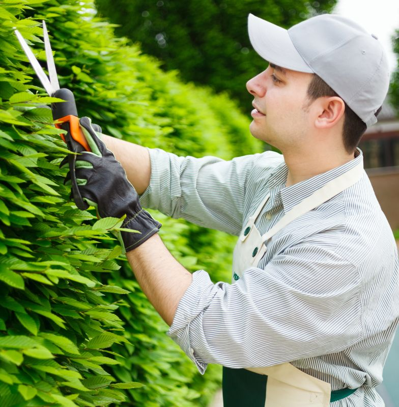 Fagus pruning faq maintenance