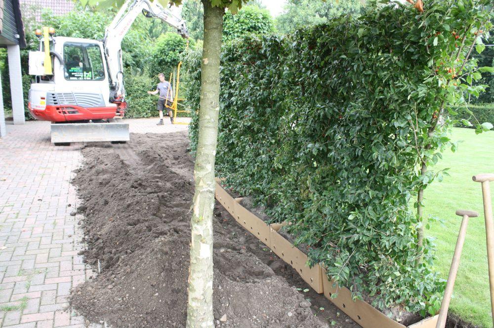 Planting Cornus mas FAQ planting digging instructions