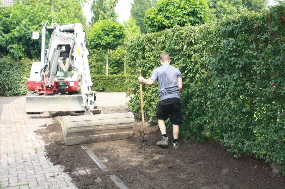 Planting Cornus mas FAQ planting soil instructions st