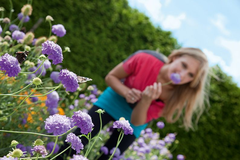 Thuja occidentalis  lifestyle family flower garden