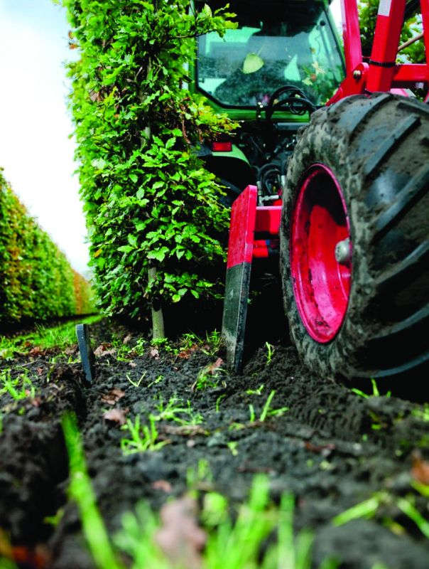Hedge root pruning