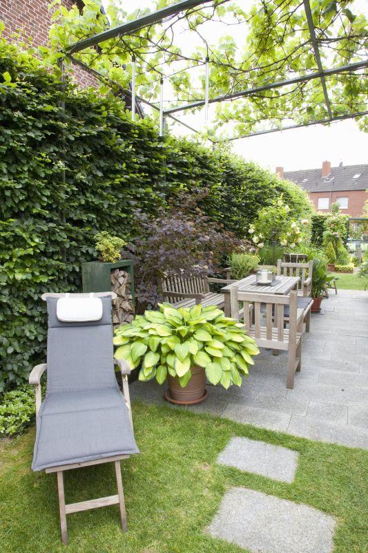 Fagus hedge beech urban patio outdoor living