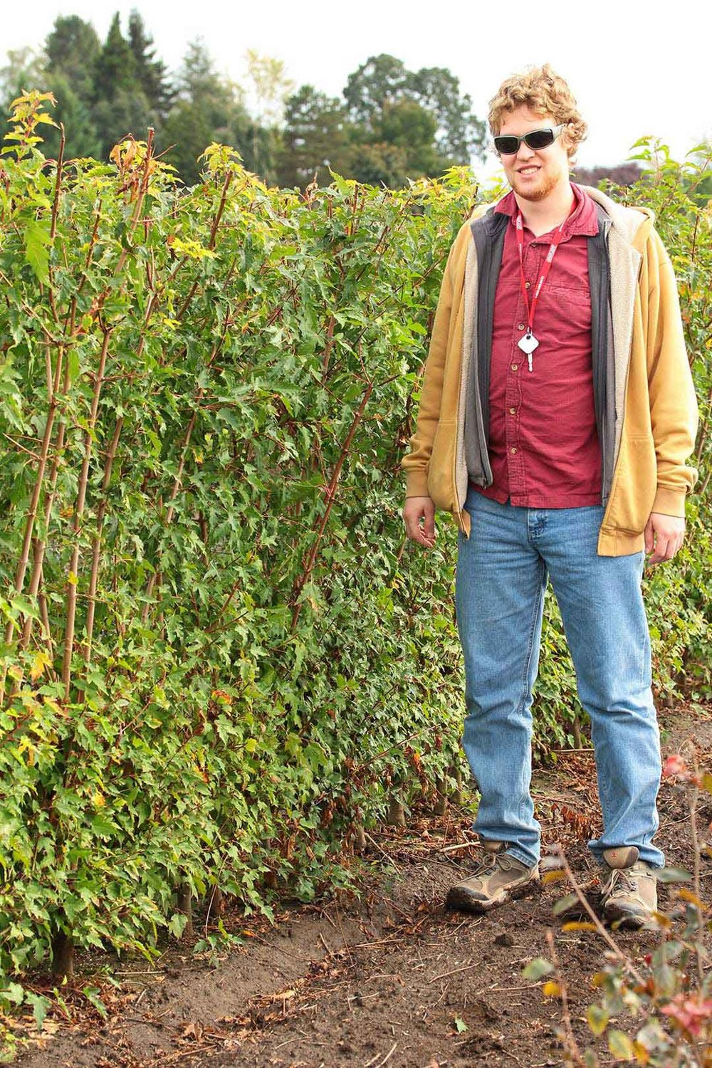 Ryan standing with row of Acer ginnala 'Flame' hedge