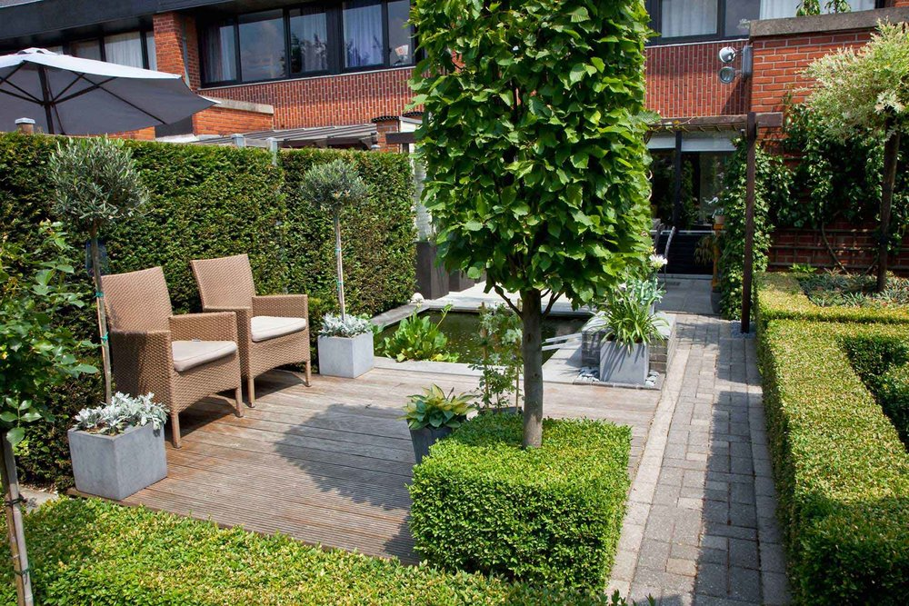 Buxus boxwood Taxus yew hedge urban garden trimmed patio courtyard commonspace preformed