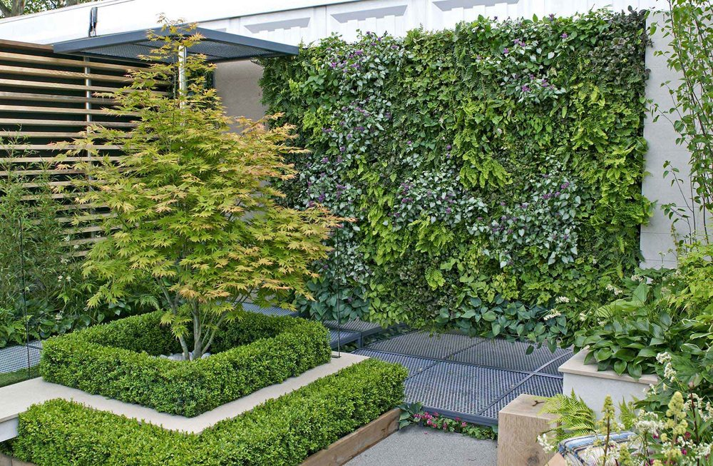 Buxus courtyard modern suburban urban patio