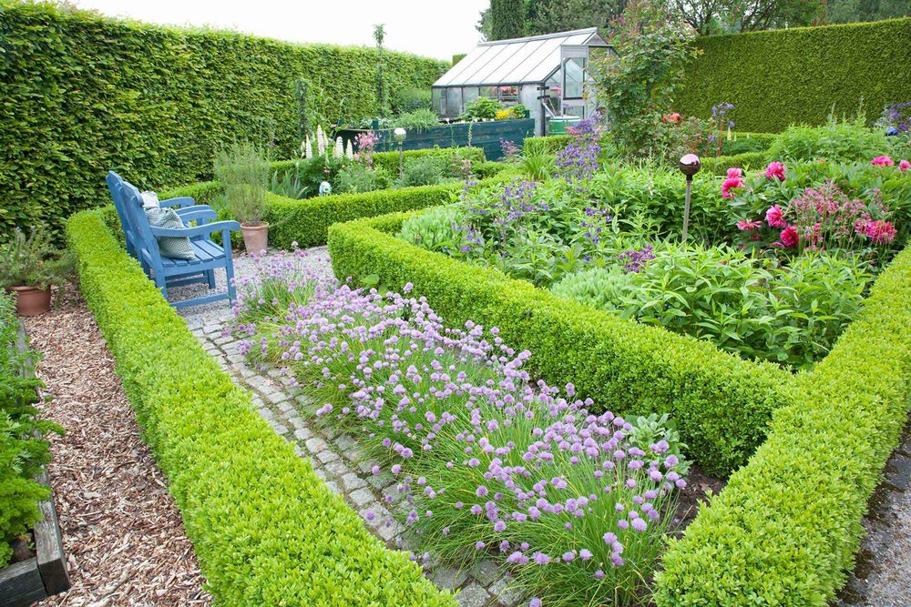 Fagus Beech boxwood Buxus hedge country knot garden