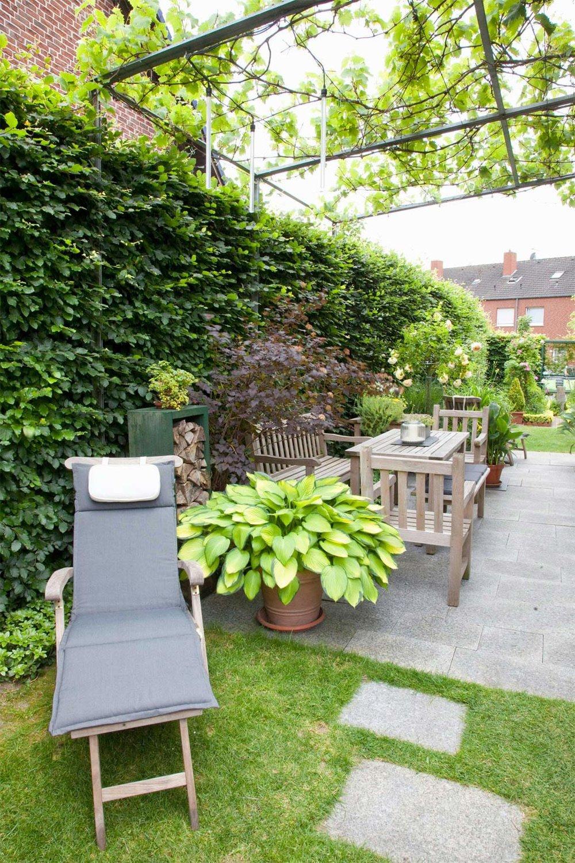 Fagus hedge beech urban back yard patio space