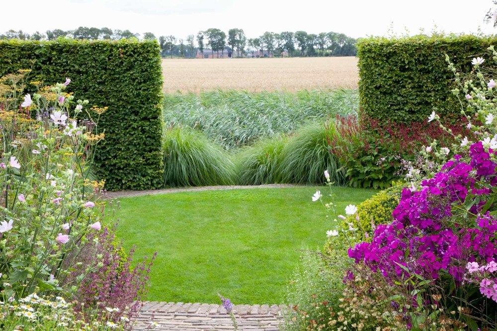 Fagus Beech hedge country estate rural view grass field