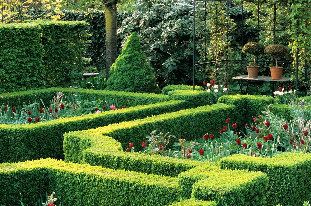 Fagus beech Buxus boxwood hedge formal country garden