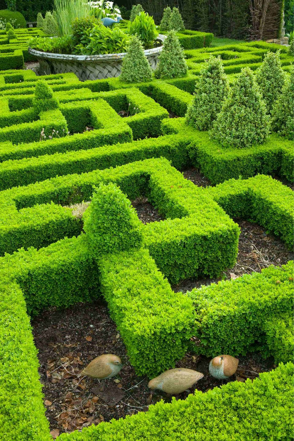 Buxus modern formal knot garden InstantHedge