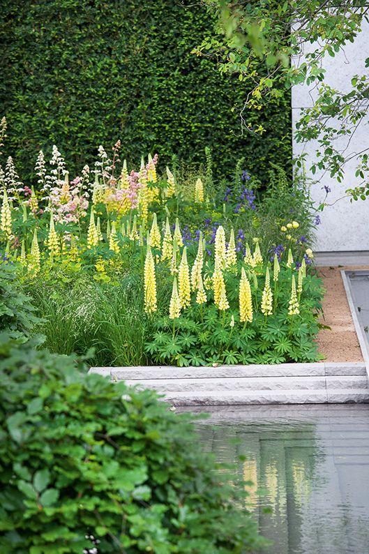 Taxus garden courtyard