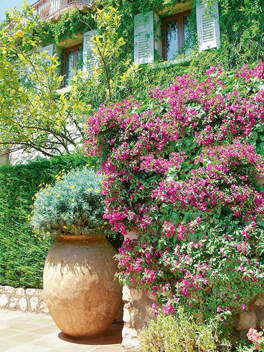 Taxus courtyard country cottage