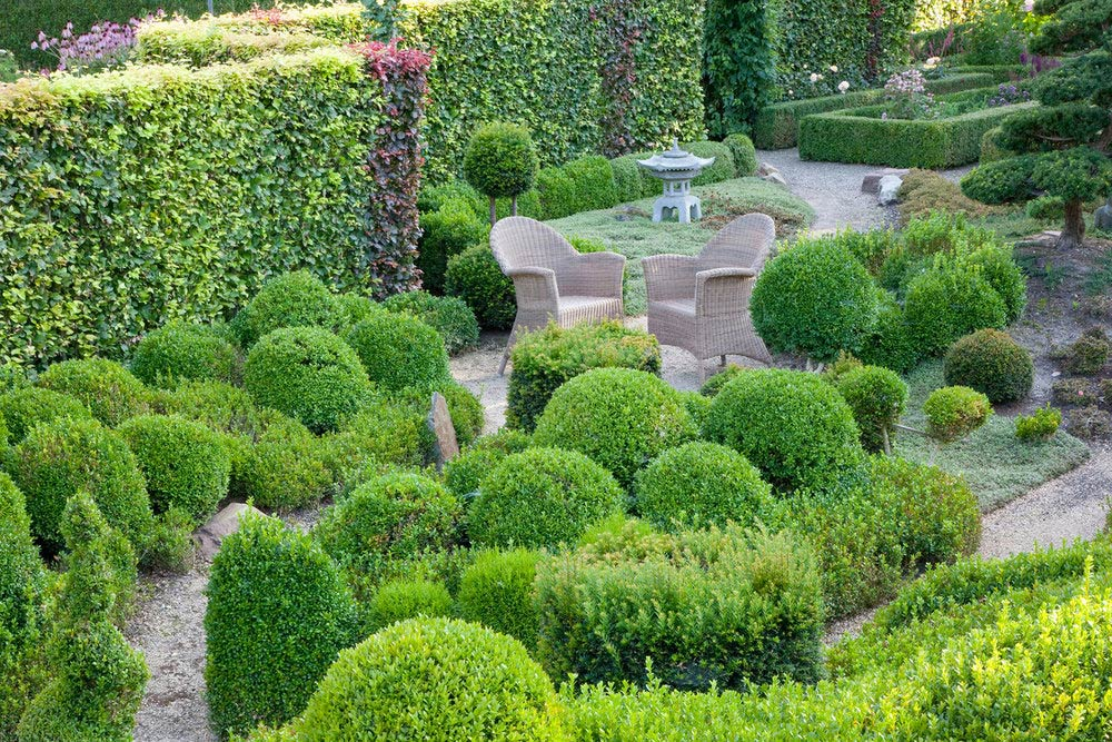 Fagus beech hedge Taxus yew boxwood Buxus country garden