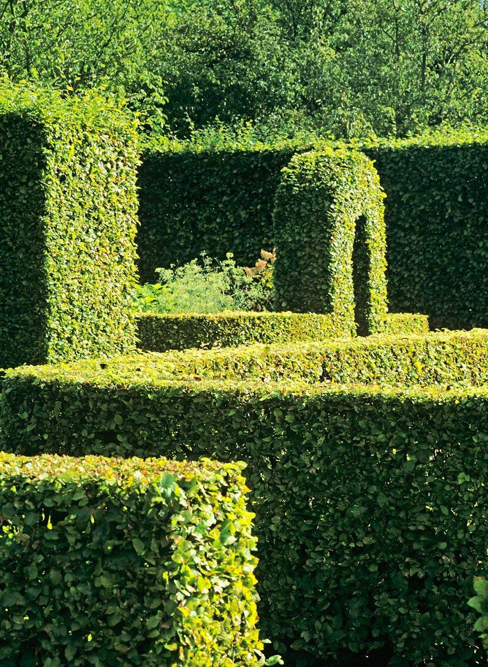 Fagus beech hedge formal garden