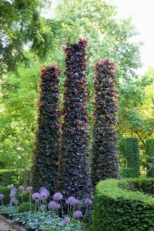Fagus beech purple hedge sculpture estate