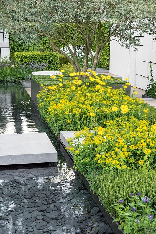 Fagus beech short hedge formal water garden
