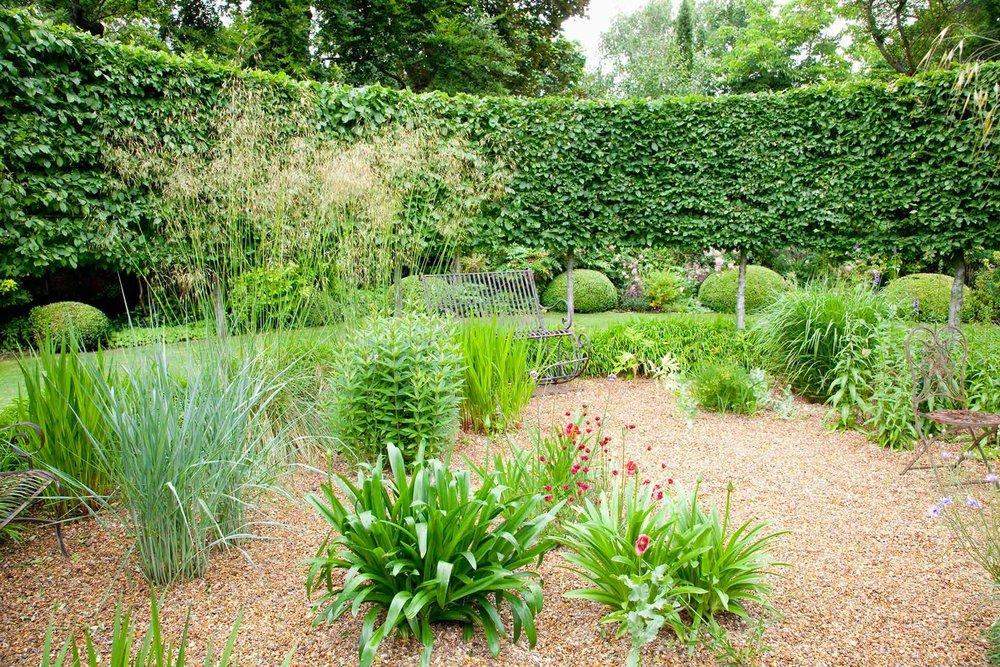 Fagus hedge beech country garden