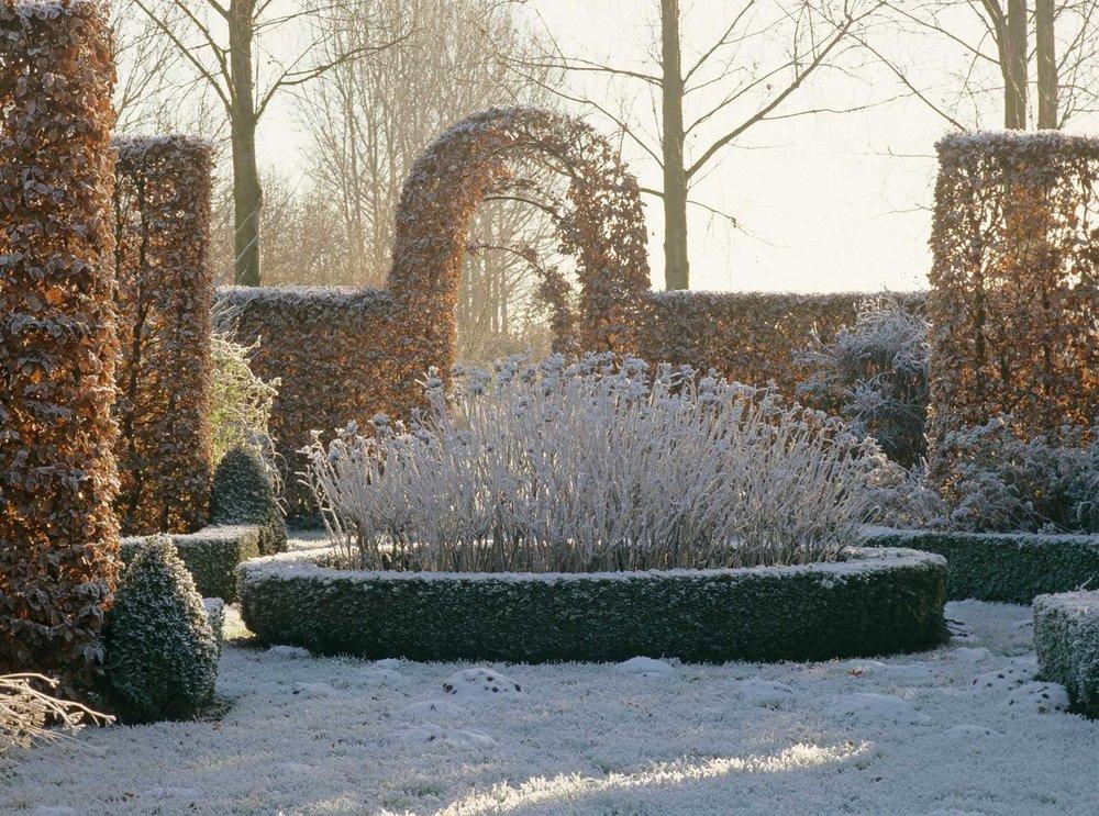 Fagus yew Buxus boxwood formal estate modern garden