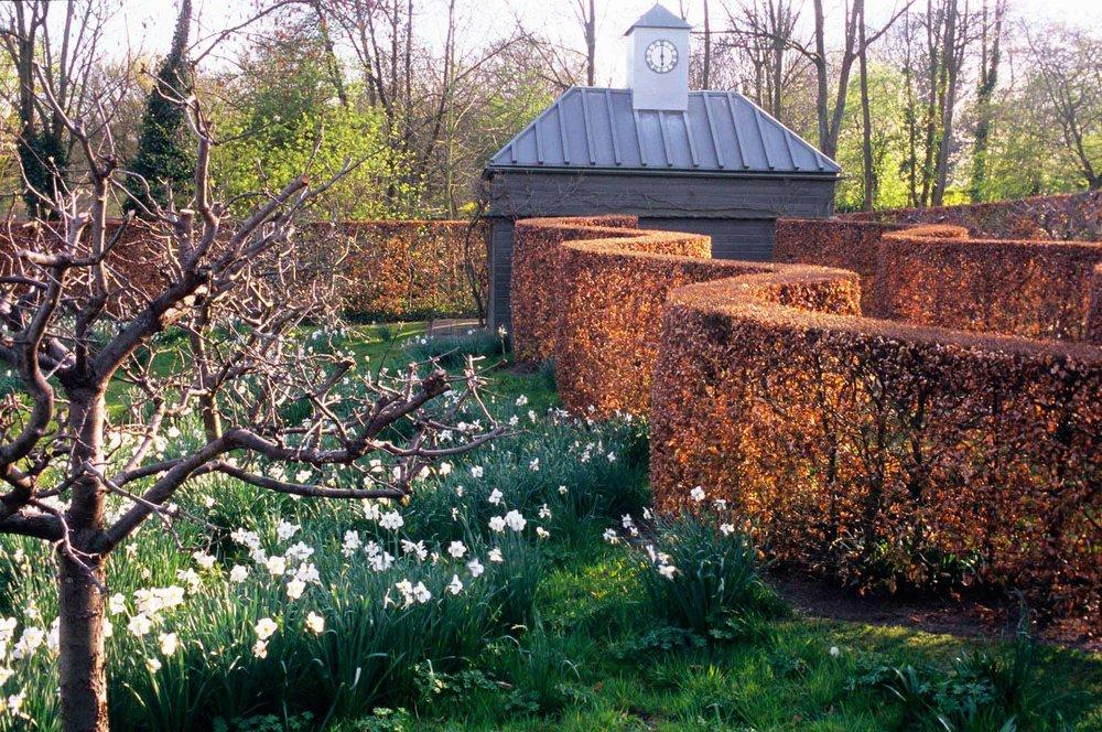 Fagus beech hedge commercial garden