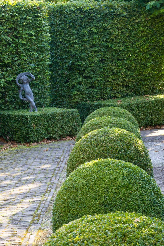 Fagus beech Buxus boxwood hedge modern garden