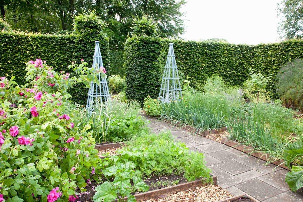 Fagus hedge beech estate garden