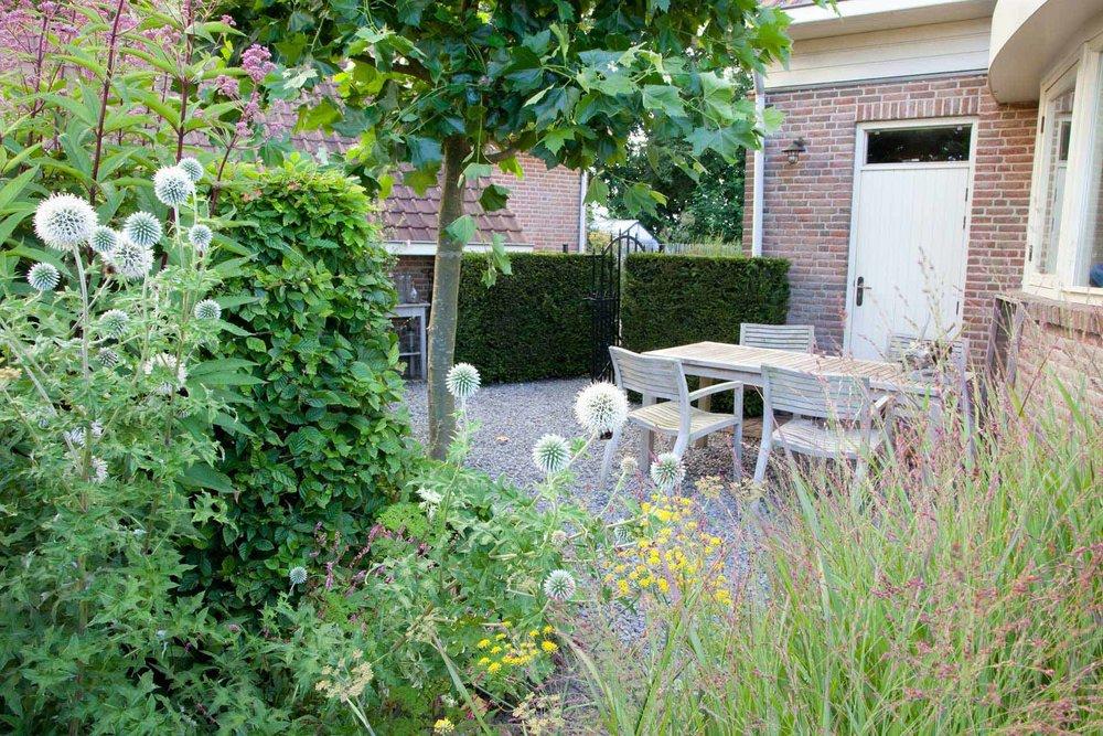 Taxus yew hedge Fagus beech urban garden