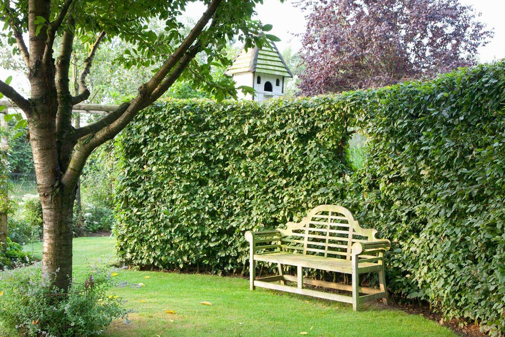 Carpinus hornbeam hedge formal modern estate garden