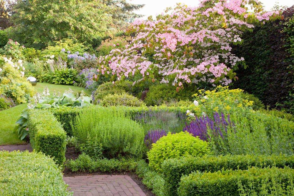 Buxus boxwood Fagus beech hedge country garden