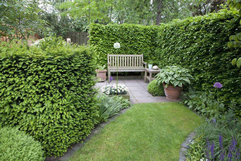 Taxus Fagus hedge yew beech country garden