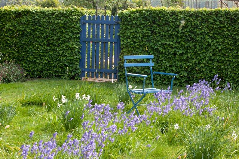 Carpinus hornbeam hedge country garden private area