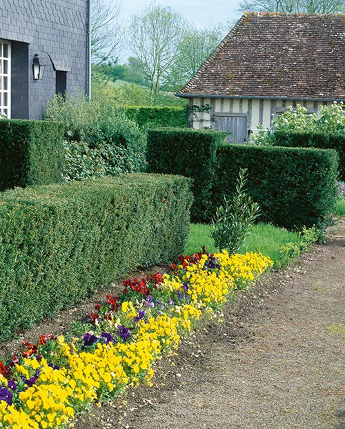 Taxus cottage driveway residential hedges trimmed