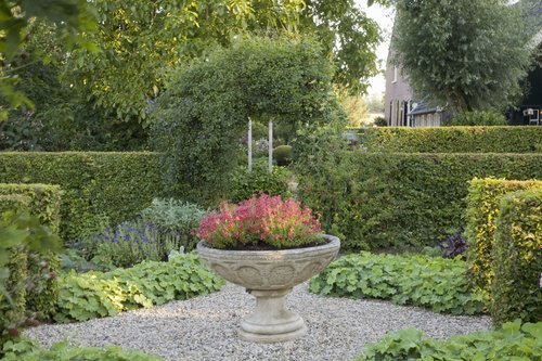 Fagus beech hedge formal country garden border privacy