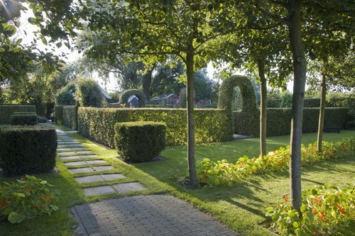 Taxus yew Fagus beech hedge formal modern garden