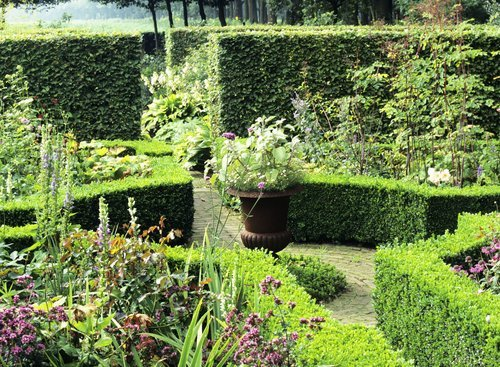 Buxus boxwood Fagus beech country garden hedge