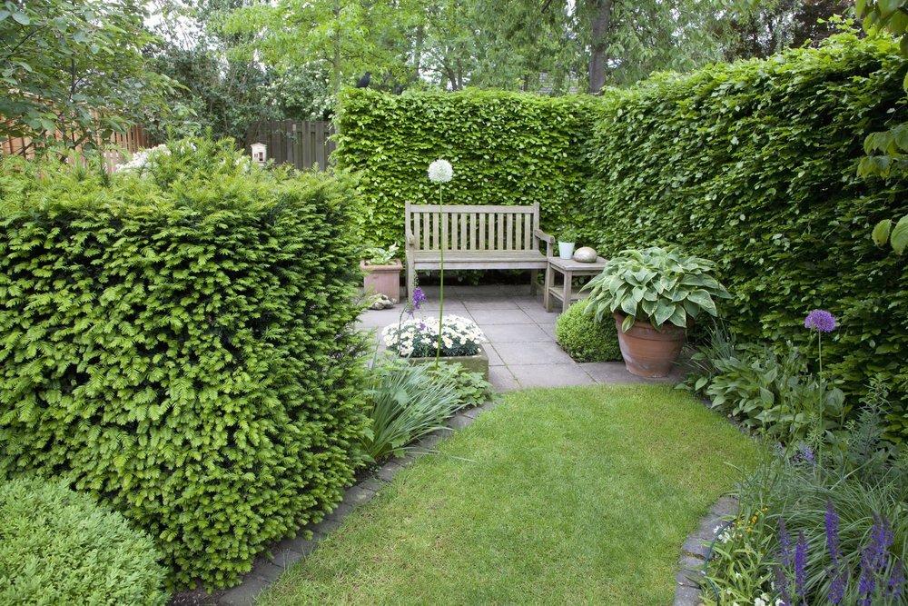 52641+Taxus+Fagus+hedge+yew+beech+country+garden-min.jpg
