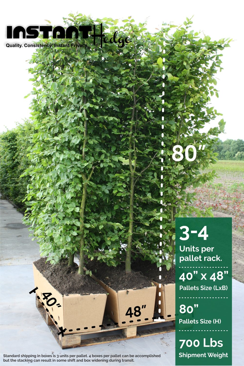 1 615284 Fagus sylvatica staging harvested (2) three hedge units pallet biodegradable cardboard ready to ship.jpg