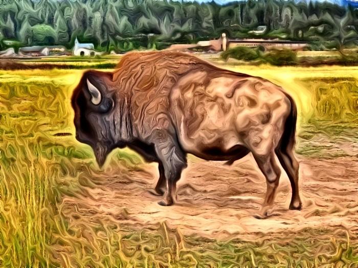 Buffalo by Lucas Henderson