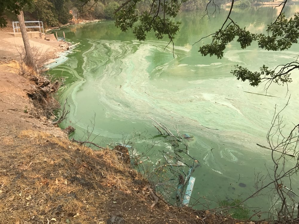 Toxic Slime behind Iron Gate Dam.jpg