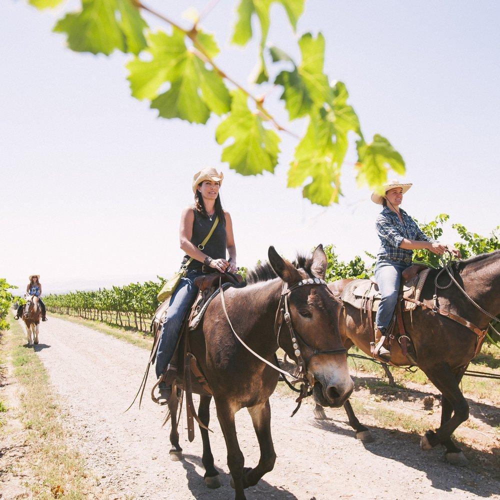 Horseback Riding (9).jpg