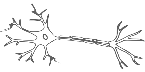 Diagram of a Motor Neuron