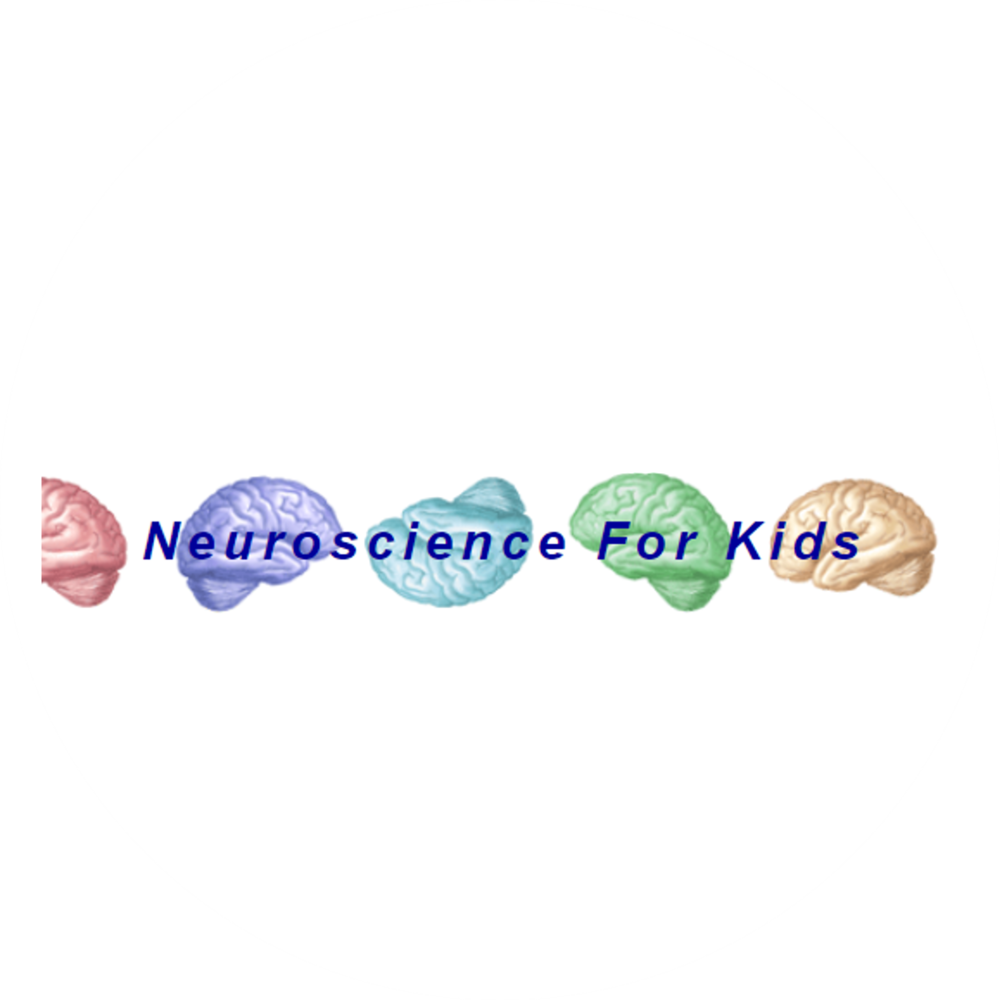 Neuroscience for Kids.png