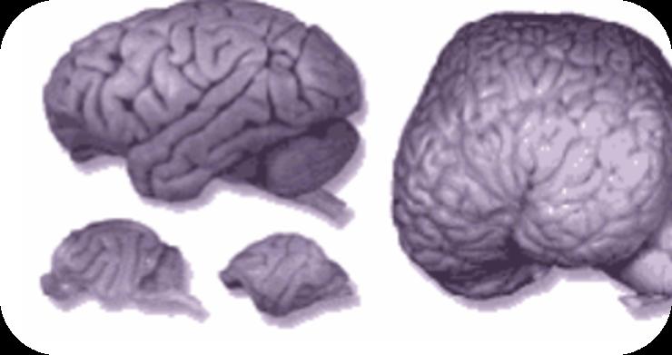 The World of Neuroscience   12 Uploads