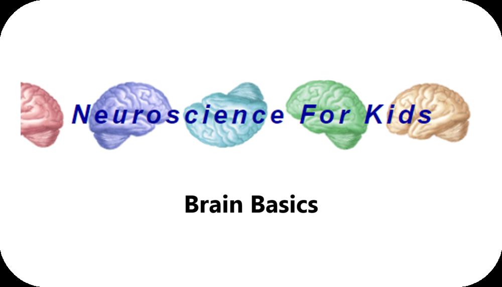 Brain Basics   25 Uploads