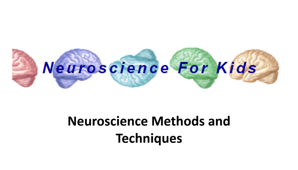 Neuroscience Methods and Techniques   6 Uploads