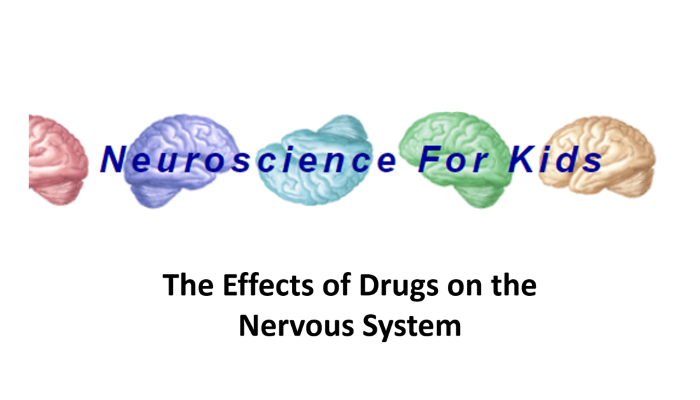 The Effects of Drugs on the Nervous System   17 Uploads